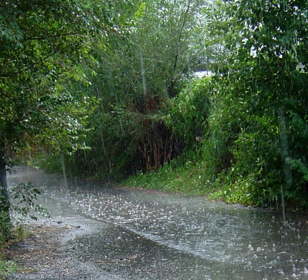 photo of raindrops falling in a paved asphault alley way