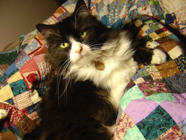 photo of black and white cat on a colorful patchwork quilt