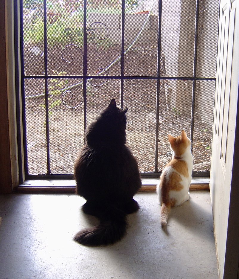 photo of a cat and kitten gazing out a screen door with sunlight pouring in & Cat and Kitten looking out Door Picture | Free Photograph | Photos ...