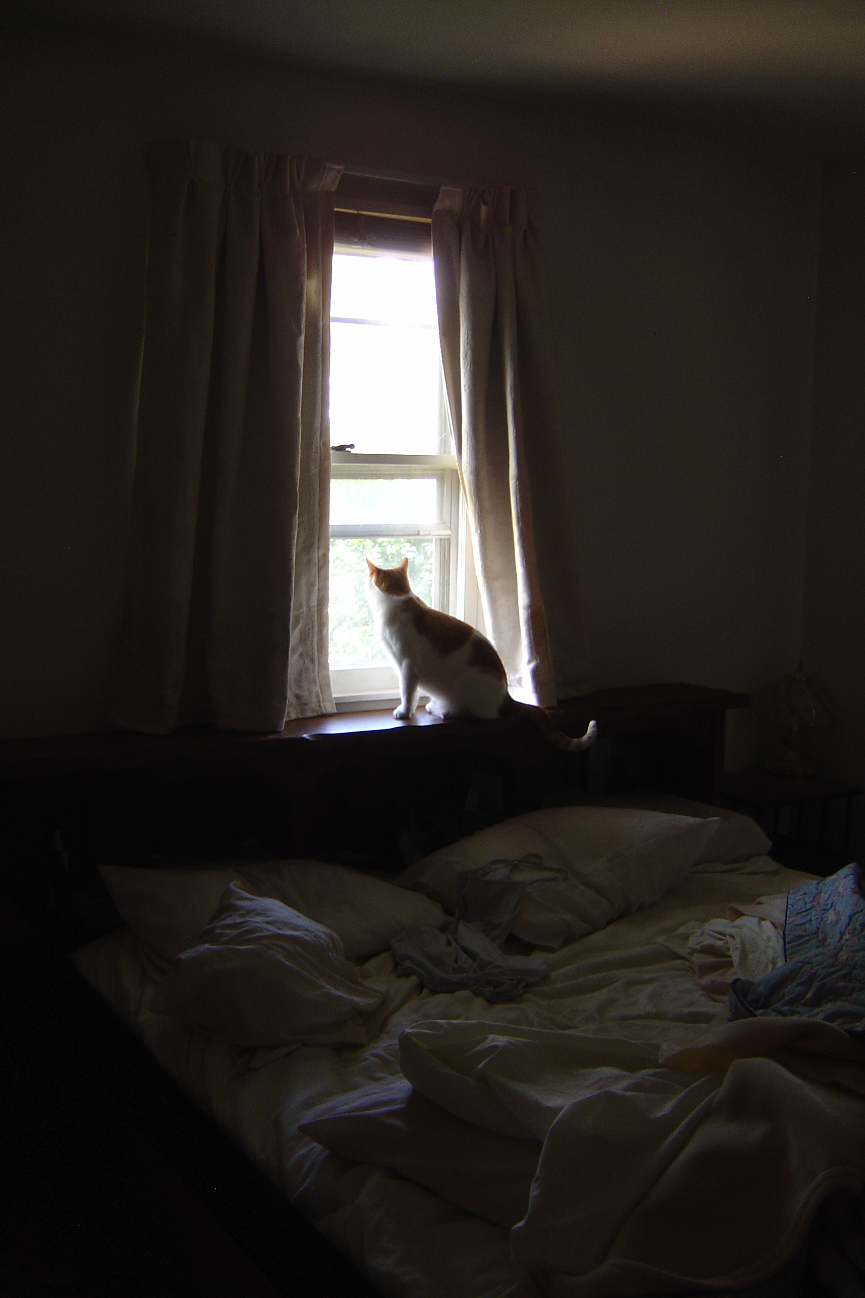 cat in bedroom window picture free photograph photos public domain. Black Bedroom Furniture Sets. Home Design Ideas