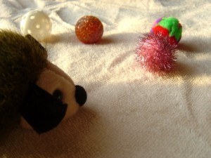 photo of balls and stuffed animal kitty toys in a sunbeam