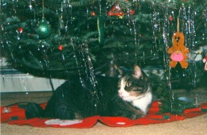 photo of a gray tabby cat underneath a Decoratied Christmas Tree