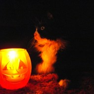 Halloween Candle with Black and White Cat