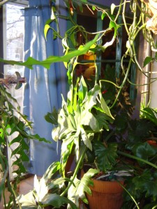 House Plants in Window