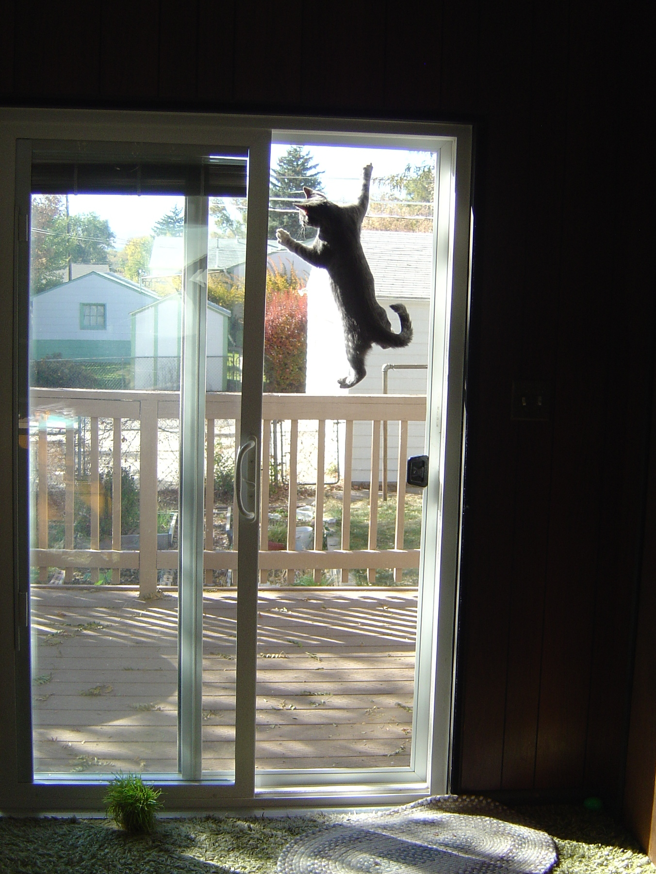 Charmant Http://www.photos Public Domain.com/wp Content/uploads/2010/08/kitten_climbing_screen_door