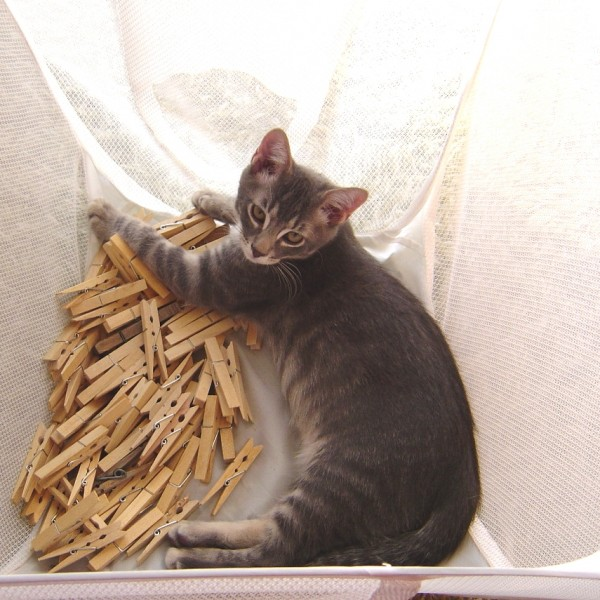 Kitten in Laundry Basket with Clothespins