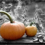 colorized photo of two pumpkins on a garden bench