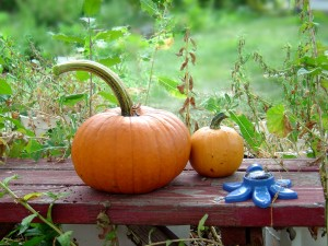 Photo of two orange pumpkins on a garden bench with a sprinkler