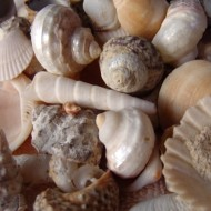 close up photo of a bunch of different sea shells