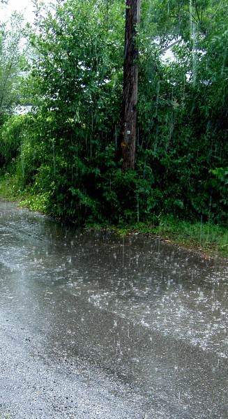 Photo of falling rain with telephone pole and green bushes