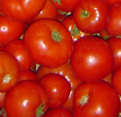 Close up photo of ripe tomatoes