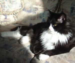 Photo of a black and white cat lounging in a sunbeam