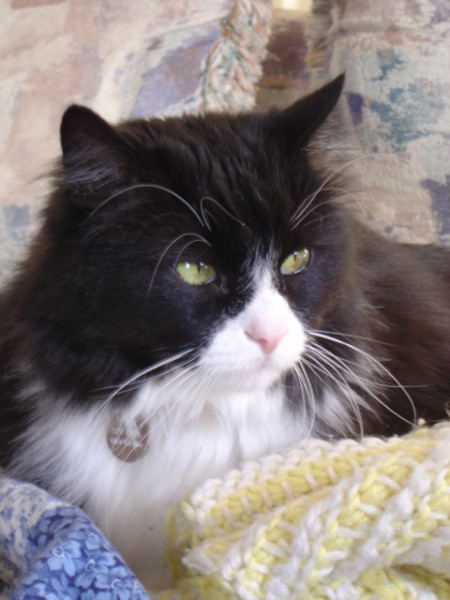 photo of a black and white cat with long whiskers