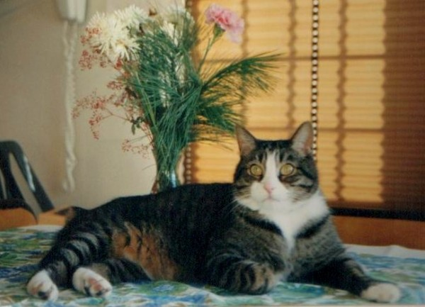 photo of a gray tabby cat posing in front of a bouquet of flowers