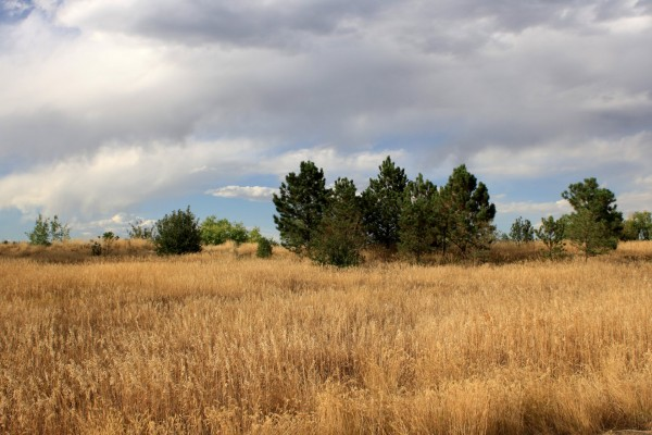 Free photo of a meadow with tall brown grass and pine trees