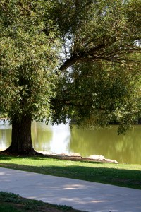 free photo of a shade tree on the shore of a lake