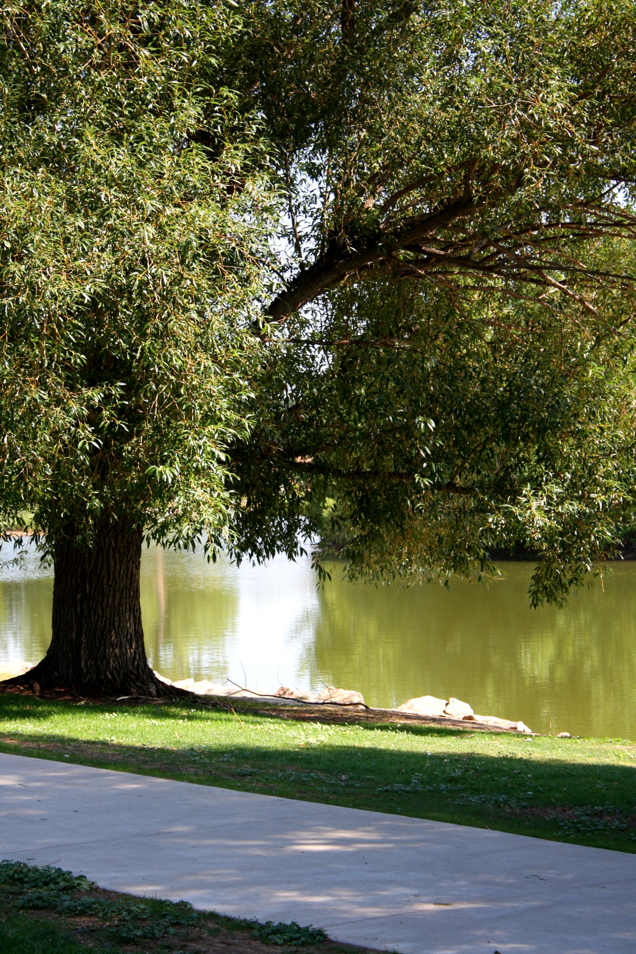 Shade Tree By Lake Picture Free Photograph Photos