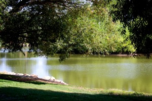 free photo of a beautiful area under a shade tree by the edge of a lake