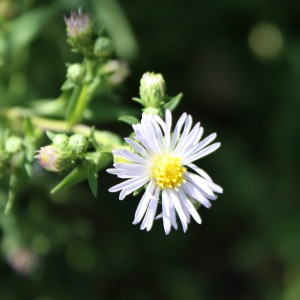 free photo of a tiny light purple colored flower with a yellow center