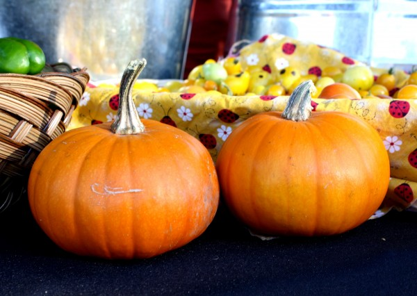 Free photo of two pumpkins