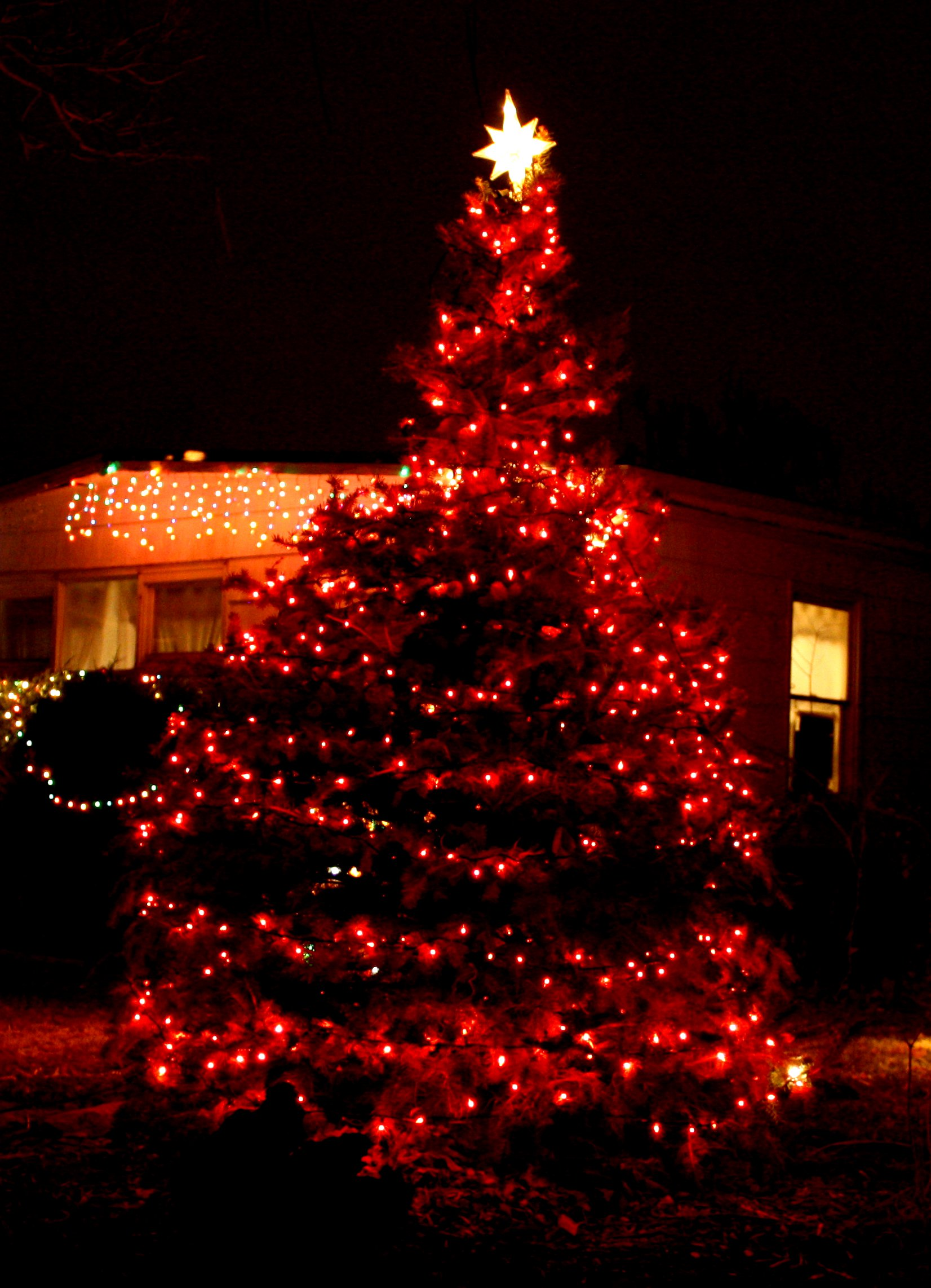 christmas tree with red lights picture free photograph