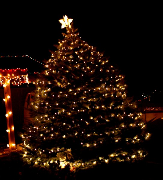 Christmas Tree Pictures High Resolution : Christmas tree with white lights picture free photograph