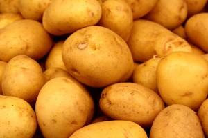 free high resolution photo of yukon gold potatoes