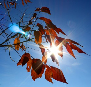 free high resolution photo of sun shinging through fall leaves