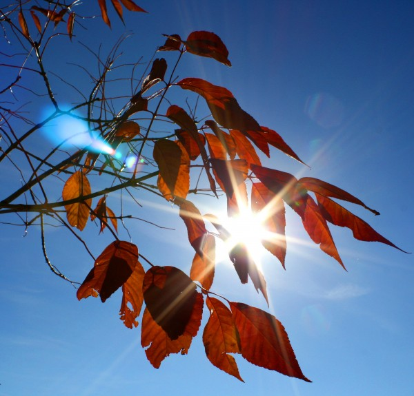 free high resolution photo of sun shining through fall leaves