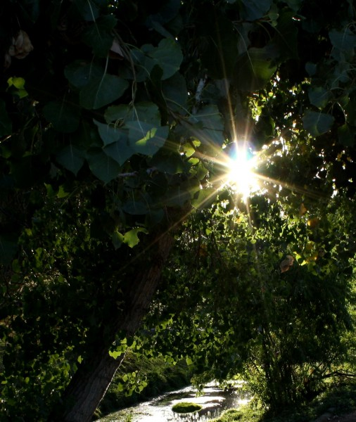 Free photo of sunlight through trees with a creek in background