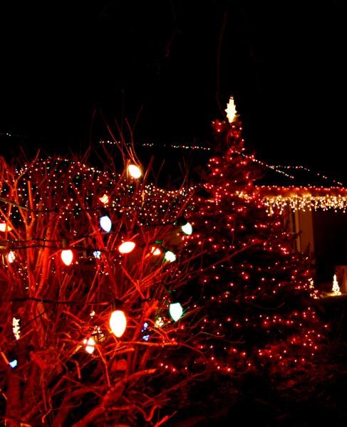 yard with christmas tree and lights - free high resolution photo