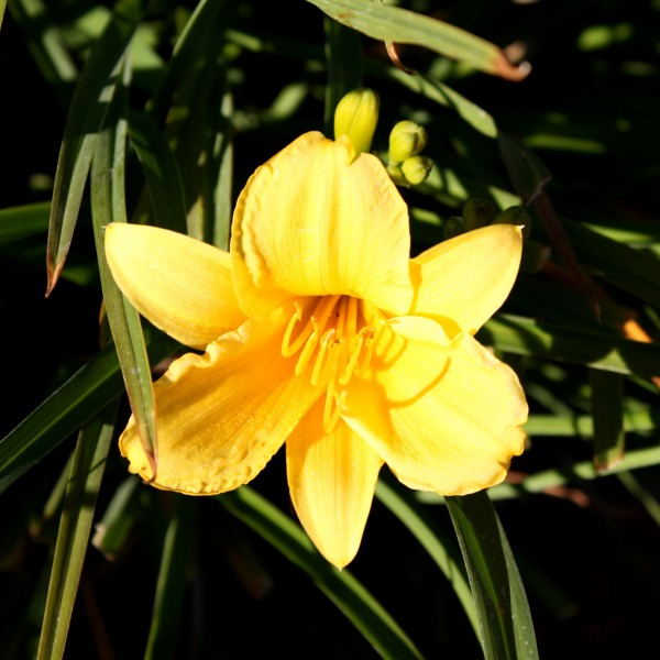 Free photo of a yellow flower