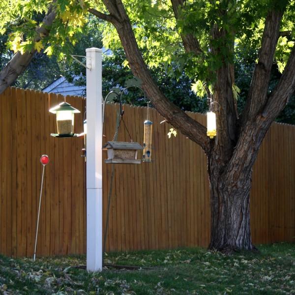 bird feeders in the sun - free high resolution photo