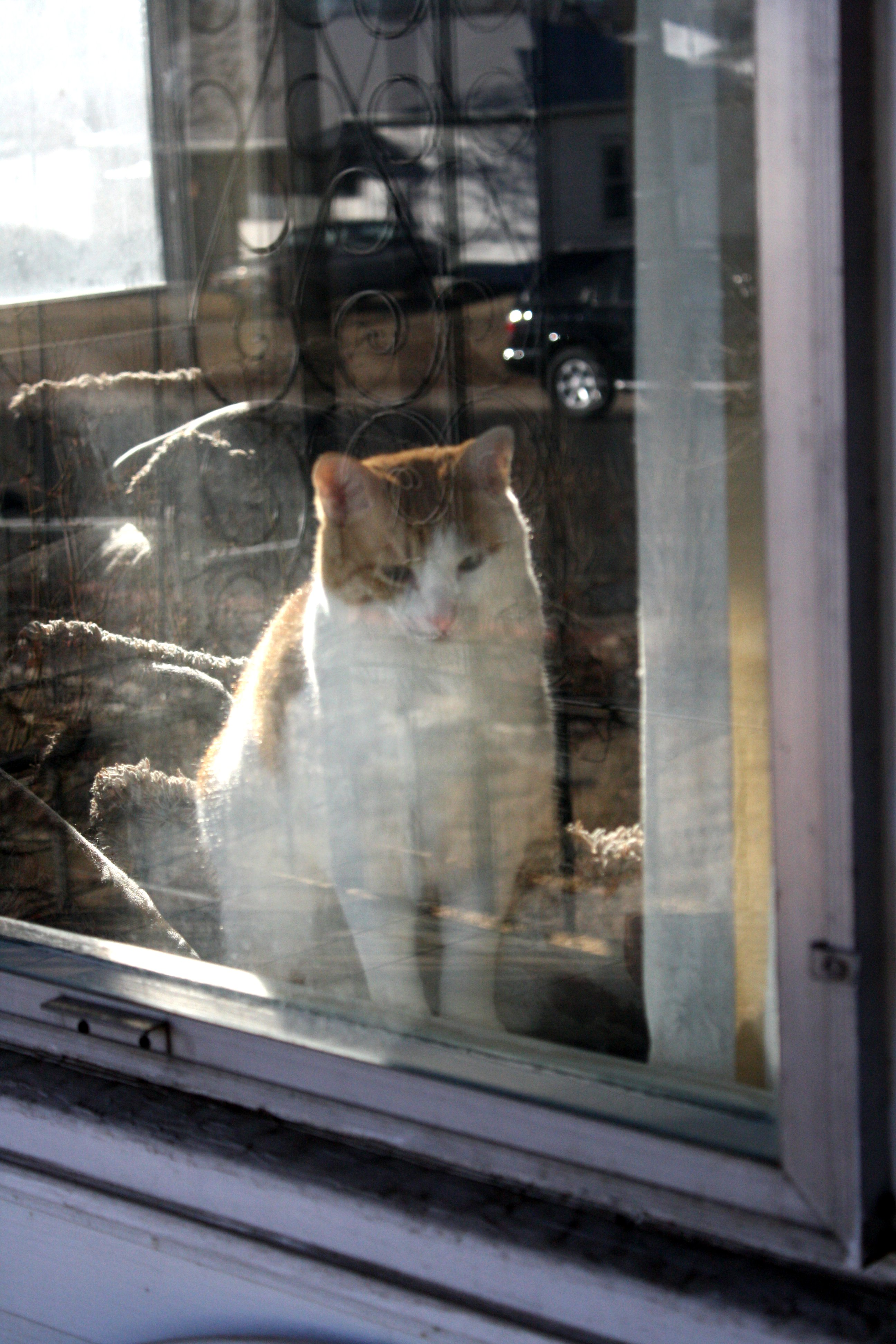 Cat Seen Through Window Picture Free Photograph Photos