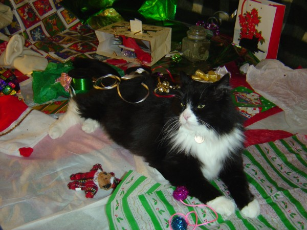 Cat Covered with Christmas Ribbons - free high resolution photo
