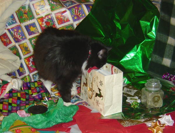 Cat Peeking In Christmas Gift Bag Picture Free