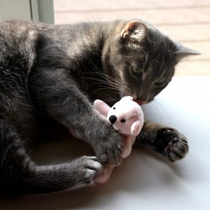 Cat With Teddy Bear - free high resolution photo