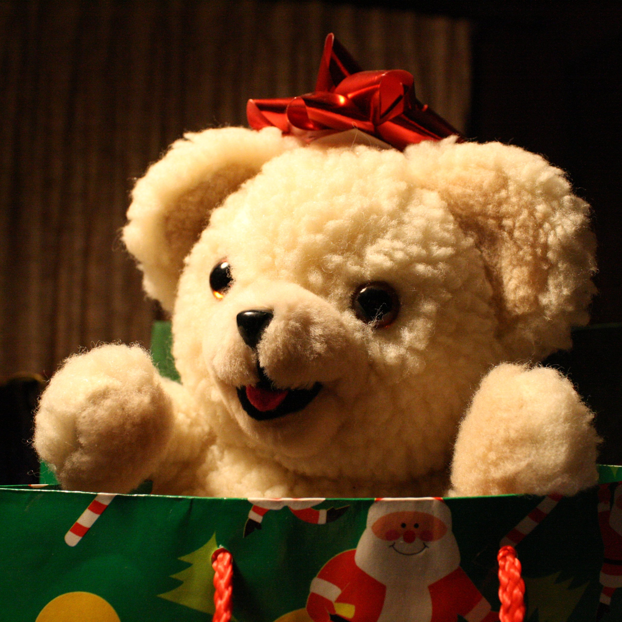Christmas Teddy Bear Picture | Free Photograph | Photos Public Domain