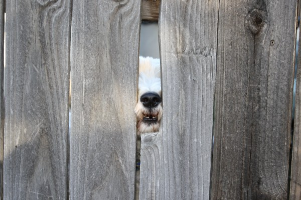 Dog Nose Through Fence Picture Free Photograph Photos