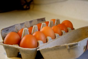 Dozen Eggs - free high resolution photo