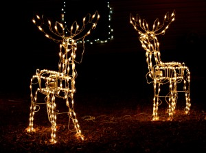 reindeer holiday lights - free high resolution photo