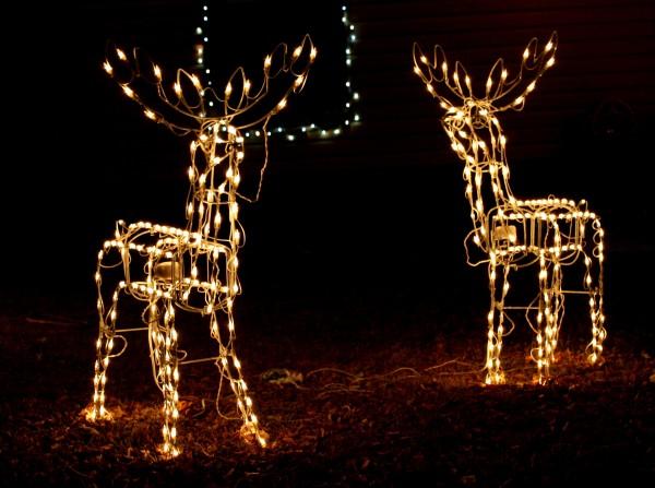 reindeer holiday lights - free high resolution photo