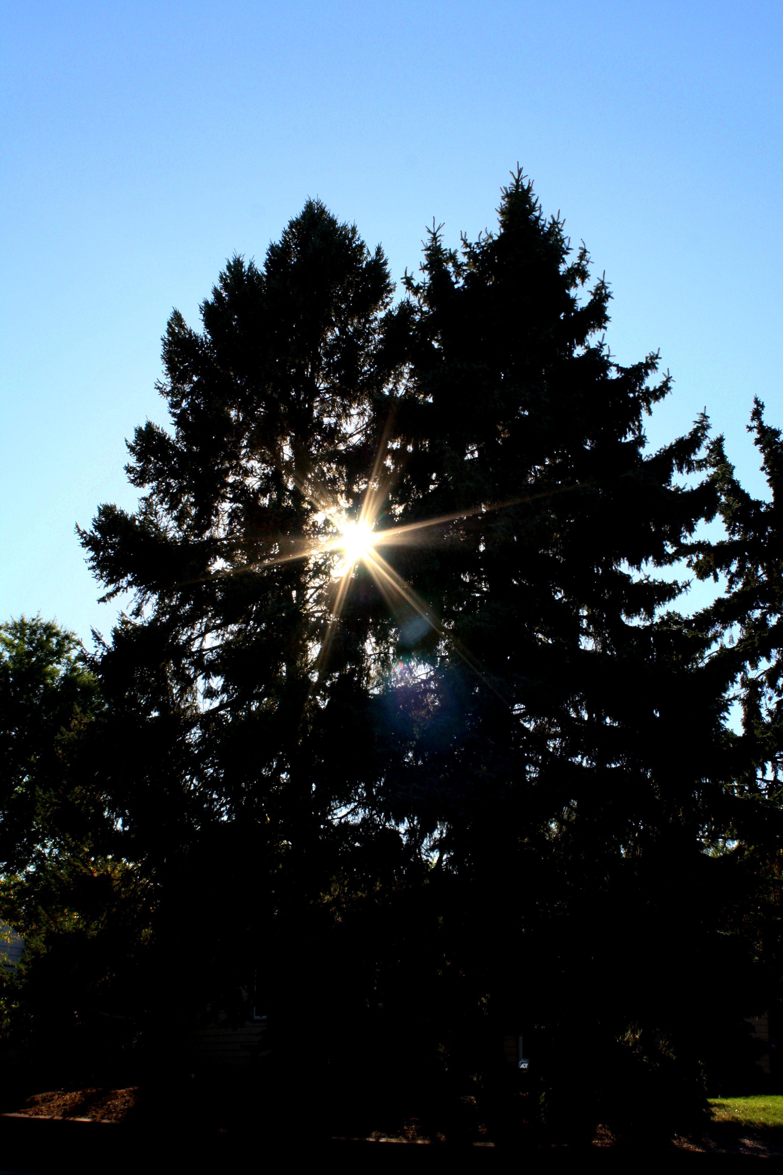 Sun Shining Drawing Sun Shining Through Pine Trees