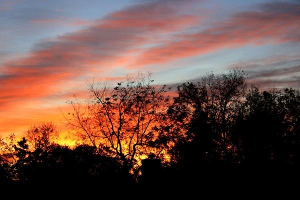 Sunset Through Trees - Free High Resolution Photo