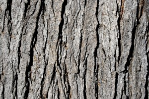 Tree Bark Texture - Free High Resolution Photo