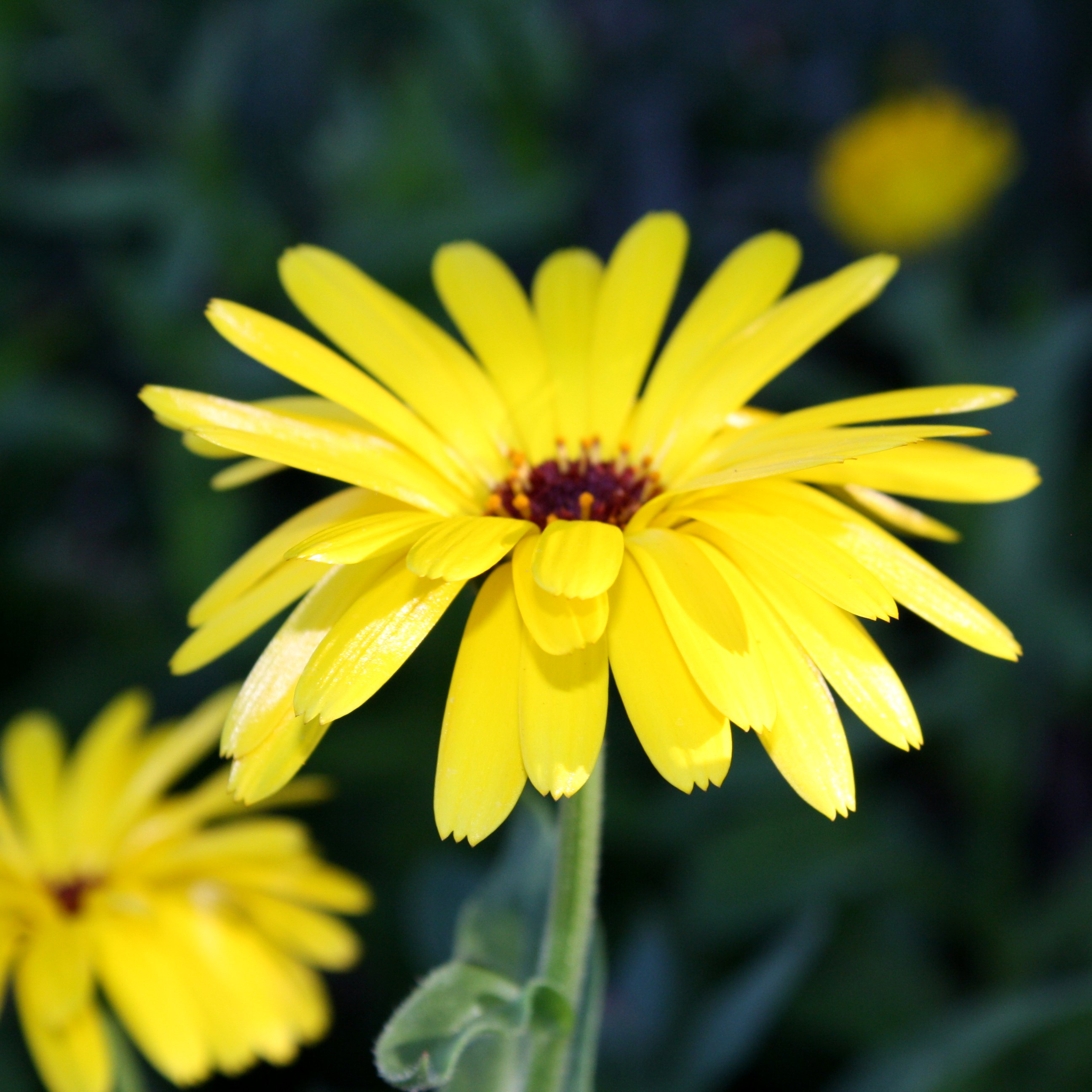 Yellow Flower with 3 Prong Petals Picture Free graph