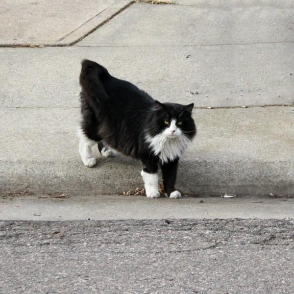 Black and White Cat on Sidewalk - Free Photo
