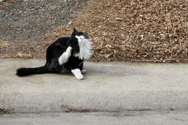 how to stop cat from scratching carpet under door