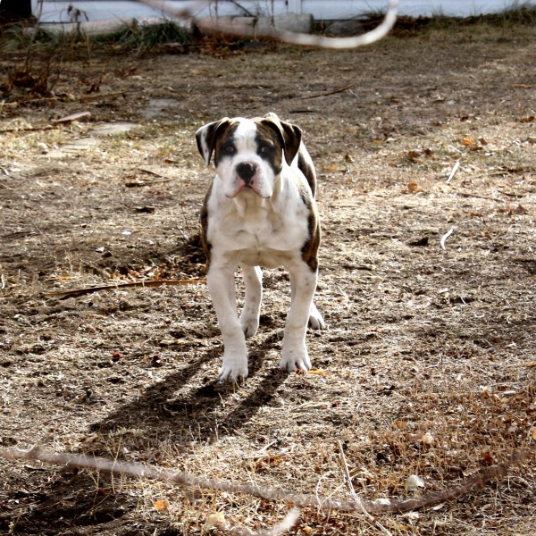Brown and White Dog - Free High Resolution Photo