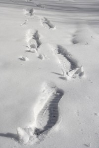 Footprints in Snow - Free High Resolution Photo
